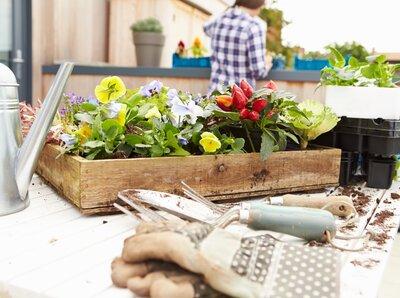 Make your own city garden!