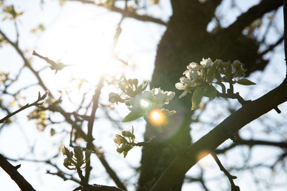 Cu primăvara în suflet