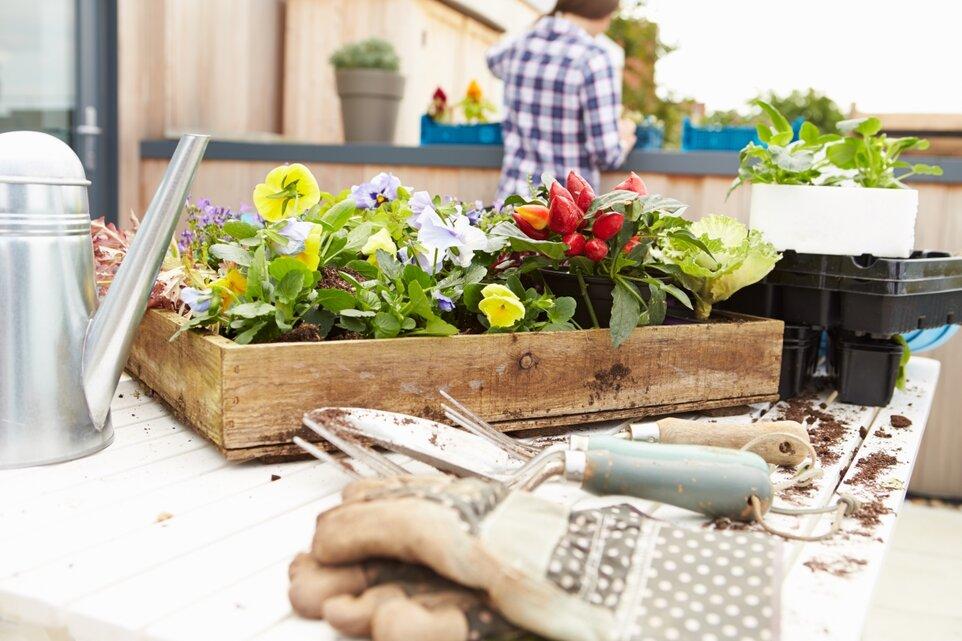 Grădina ta de la oraș - cum îți faci o oază verde în balcon sau pe casă